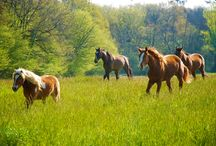 HORSE RIDING HOLIDAY EQUESTRIAN ESCAPES