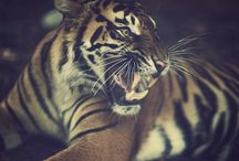 Animal Magic / by Summer Voelker