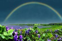 Paint Me A Rainbow / by Lou Ann Laughlin