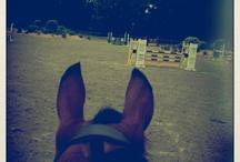 Random horse pics