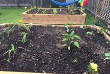 Container Vegetable Garden / Container vegetable backyard garden organic