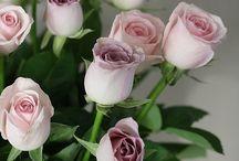 ༺♥༻Roses༺♥༻
