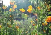 Organic gardening in San Jose, CA / http://www.examiner.com/organic-gardening-in-san-jose/jessica-vaughan