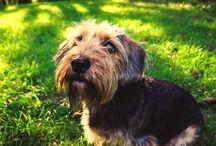 Dogs- my photos
