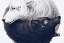 ♡wolf♡ / Only beautiful wolfs...♡