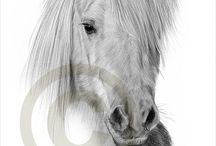 Horse drawings / by Charlotte Duron