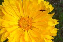 Flori / Din natura adunate