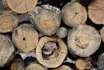 Nature / Tree Logs in Jungle