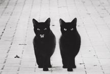 black cats invasion