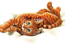 Franciens katten  tekeningen