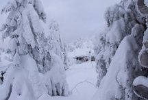 Reis Lapland