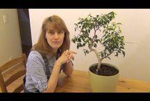 Видосики о растениях