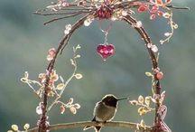 oiseaux et jardins