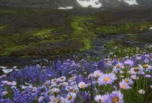 Amazing Photos: Flowers and Valleys