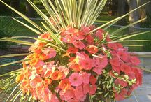 Stunning Combos / Stunning plant combinations we love.