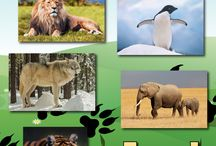Rainforest Animals / Learn about rainforest animals from all around the world. Rainforests are incredibly biodiverse - home to millions upon millions of species, many of which are still to be discovered. On this board, I'll be posting pictures, facts and information about rainforest animals.