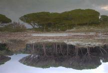 Lungo il cammino... natura / Fotografie di paesaggi ai bordi della natura.