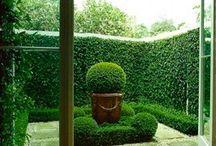 Garden ideas*