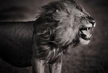 Nature's Beasts