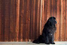 Dogs! / by Karen Woblick