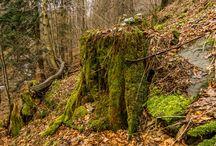 Księga Lasów