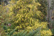 DUET-BUD-Realizacja: Ogrody / Nasza tablica ukazuje realizacje wykonane przez nas w ogrodach naszych klientów.