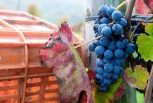 ABC's of Campania Food & Wine