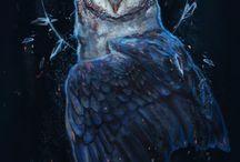 /owl/