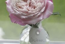 Bridal Roses Blush and Pink / Varieties of rose