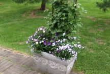 My garden / This garden of mine is situated in Finland on lattitude 64.
