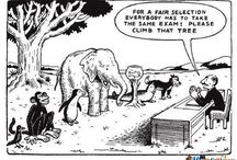 Assessment Models