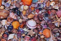 Maravilhas do Nosso Mar