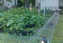 nova zahrada