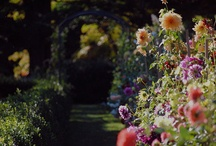 Secret Gardens / Lovely wee places with flowers, hidden spots and all the other prettiness.