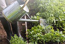 Giardinaggio / Idee e spunti per il giardinaggio