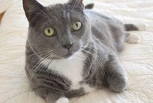 July is Tuxedo Cat Month