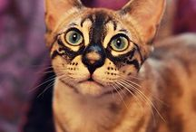 kočky jsou nejvíc :)