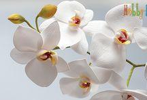орхидеи мк
