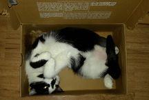 Our little tripod Lily / Tripod cat/Třínohá kočička/Window accident/Nehoda ve ventilačce