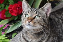 Springtime Pet Care