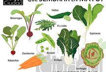 Huerta , aromaticas, medicinales y Jardineriai