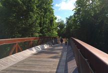 Feature - Bridge / by Cameron R. Rodman