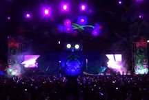 Electric Daisy Carnival XyloBands / Xylobands at ELECTRIC DAISY CARNIVAL 2013