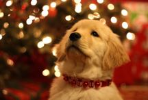 Cute Christmas Animals / Cute Wuvely Christmas loving animals www.wuvely/cute-christmas-animals
