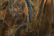 Teias de aranhas