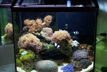 aquarium ideas / by Julie Chiasson