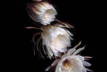 Flower Photography Inspiration