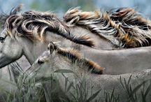 Exquisite equines