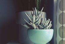 Plants // Nature