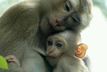 Mothers in Love